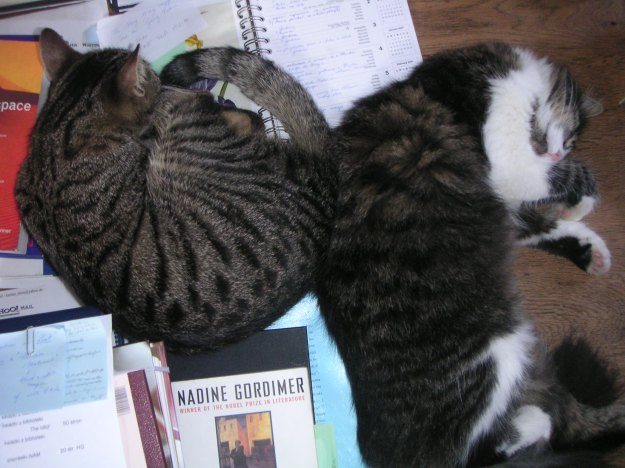 Anya and Mozart supervising the writing of my PhD thesis on Nadine Gordimer