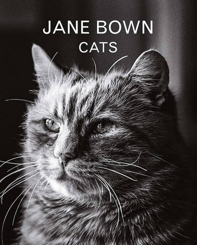 jane-bown-cats