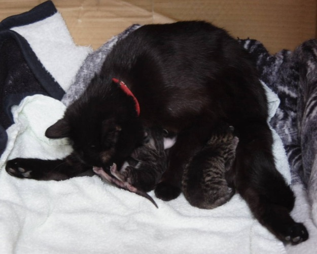 Glinka and her kittens